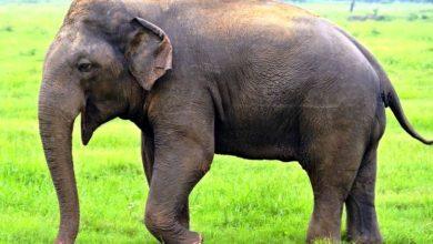 Photo of गजब: हाथी ने दिनदिहाड़े की लूट, देखते रह गए लोग! देखिये वीडियो