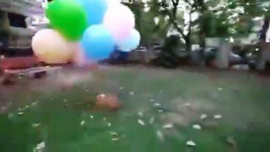 Photo of अमानवीय: गुब्बारों के साथ कुत्ते को बांधकर हवा में उड़ाया, पुलिस ने किया गिरफ्तार