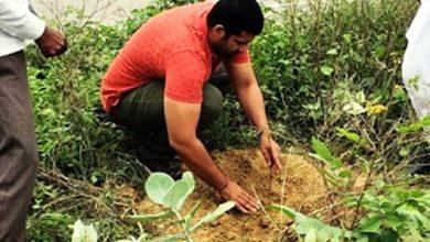 Photo of युवा उद्ममी आकाश पांडे ने किया वृक्षारोपण, घर-घर में करते हैं औषधीय पौधों का वितरण
